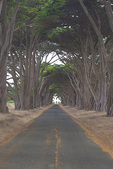 D800e 98.  The RCA Building, circa 1929 and cypress lined driveway.  Pt. Reyes National Park, CA