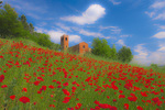 """D3X 6 PI.  Red poppies surround the 10th century church and bell tower of """"Pieve Di San Giovanni Battista"""" at Corazzano, Tuscany, Italy"""