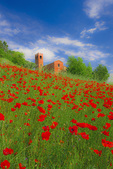 D3X 34 PI.  Red poppies surround the 10th century church and bell tower of &quot;Pieve Di San Giovanni Battista&quot; at Corazzano, Tuscany, Italy