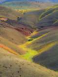 LF 1 PI.  Bee flowers give shape to the rolling topography of the Painted Hills at sunrise.  John Day Fossil Beds National Monument, OR