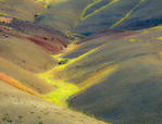 LF 76 PI.  Bee flowers help define the rolling topography of the Painted Hills, at sunrise.  John Day Fossil Beds National Monument, OR