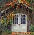 SF 63 PI.  An old garage straddled by fall maple.  Portland, OR