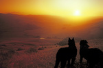 SF 1083 PI.  Two dogs watch the sunset in the Chileno Valley, Western Marin County, CA