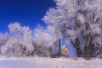 SF 2188 PI  Hoar frost and snow encase cottonwoods and barn in rural Iowa. Cass County, Iowa