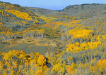 LF 317. Little Blitzen Gorge at the peak of fall aspen color, at sunrise. Steens Mountain Wilderness, OR