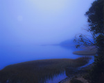 MF 470 PI.  The full moon through fog at sunrise on the east shore of Tomales Bay, CA
