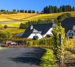 D850 5.  Zenith Vineyard, mid morning, mid Oct. Eola-Amity Hills, Salem, Oregon