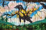 D850 9.  Graffiti 1.  Graffiti on a wood urban fence.