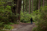 A man hikes the Lady Bird Johnson Grove trail. 