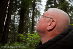 Man looking into the Redwoods.