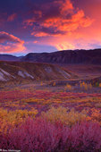Sunset in Sable Pass, Denali National Park, Alaska.