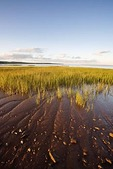 Bay of Fundy mud flats on the Cumberland Basin, part of the Chignecto Bay at Rockport, New Brunswick