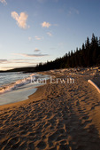 Driftwood littered sand beaches and boreal forest along the shores of Lake Superior in Pukaskwa National Park, Ontario