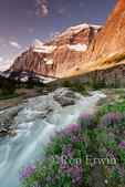 Mount Edith Cavell, glacial stream and fireweed, Jasper National Park, Alberta - the Ghost Glacier is visible on the left side of the mountain  and to its right is visible the left wing of the Angel Glacier