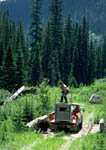 """Relocated grizzly bear hits the ground as Game Warden Lou Kis drops trap door and hollers \""""Go\"""" to the truck driver. Sixth image in a sequence."""