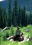 Relocated grizzly bear jumps from the trap to the ground. Fifth image in a sequence.
