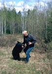 Black bear grabs a photographer's arm in its mouth.