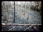 Aftermath of a Forest Fire.