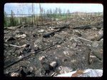 Aftermath of Forest Fire.