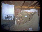 Pelvis from a Mammoth at Mammoth Hot Springs South Dakota.