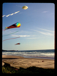 Colorful Kites Flying over and Oregon Beach.