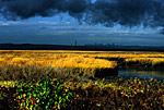 Saltmarsh and Storm Clouds