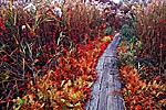 Autumn Saltmarsh and Boardwalk