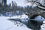 Winter In Central Park With Mallards