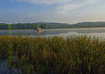 Great Blue Heron And Fresh - Water Marsh In Early Light