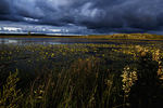 Freshwater marsh and storm clouds in sunset light