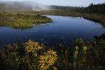 Spruce bog in Algonquin Provincial Park