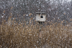 Barn owl box in mid March snow fall