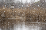 Barn owl box and pond in mid March snow fall