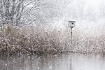 Spring snow with barn owl box in salt marsh habitat