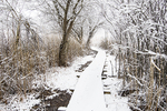 April snow boardwalk through salt marsh habitat