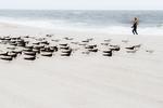 Black skimmer flock and jogger on beach in late September