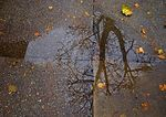 Reflection On November Sidewalk