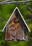 Birdhouse with House Wren