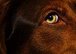 Ruby's Eye