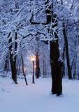 Path Through Winter Woods With Lights