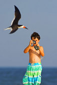 Boy photographing black skimmer