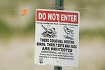 Endangered shorebird sign