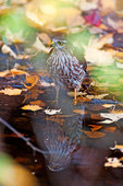 Sharpie and reflection in autumn