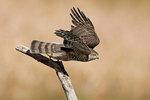 Sharpie leaving perch