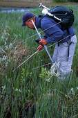 Biologist using  radio telemetry to track rattlesnakes
