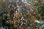 Late October snowfall