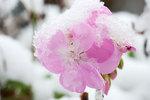 Late October geranium blossom