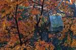 Birdhouse and black cherry in autumn