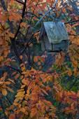 Birdhouse and cherry tree in autumn