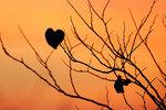 Last redbud leaf at autumn dawn